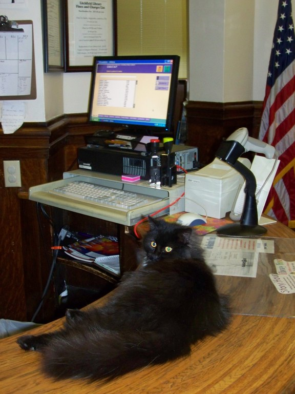 Stacks the Library Cat